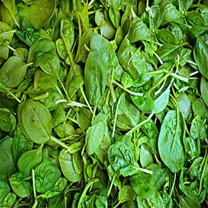 Espinacas verduras de temporada en otoño