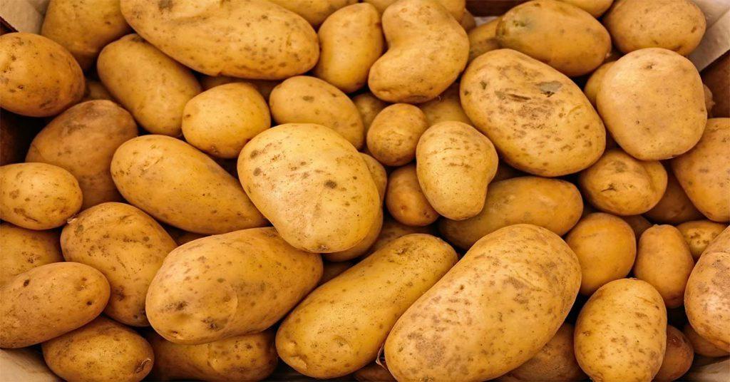 patata alimentos precolombinos